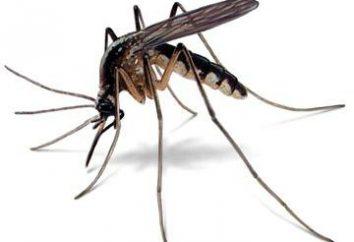 """""""El mosquito no socava la nariz"""": el origen, el significado y las situaciones de uso"""