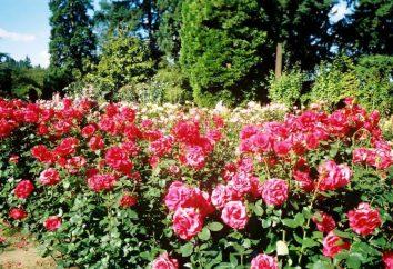 Ogród Botaniczny Krzywy Róg – raj