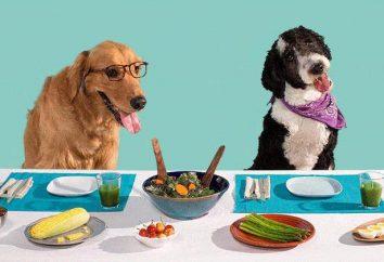 Gladden il vostro animale domestico: Torta di cane – quello che serve a quattro zampe amico
