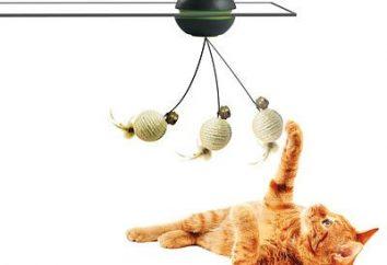 Najlepsza zabawka dla kotka własnymi rękami