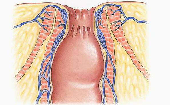 La estructura anatómica del ano humana