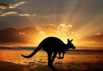 Austrália, fatos interessantes – as montanhas mais altas, o maior rio e os animais mais perigosos da Austrália