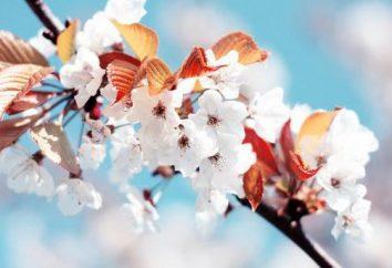 O que é primavera? É hora de novas descobertas e começos, revivendo sentimentos e emoções!