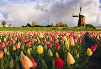Jak dbać o tulipanów w różnych porach roku