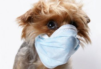 Est-ce que votre chien tousse comme si elle était étouffante? Nous savons quoi faire!