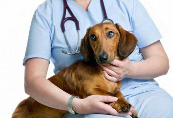"""""""Propalin"""" dla psów: analogowy, instrukcję obsługi, składu i opinie"""