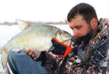 Grande pesca a Krasnodar: centri ricreativi pagati