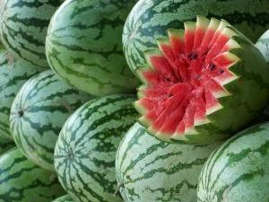 Watermelon – wächst im Ural möglich!