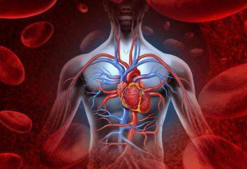 Automatyzm ludzkiego serca: definicja, opis, jednostki i gradientu