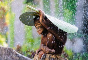 Czy powinienem iść do Phuket w sierpniu? Pogoda, morze, recenzje