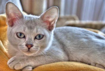 Najdroższe cat: rasy i opis