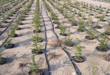 nastro di irrigazione a goccia su un sito giardino