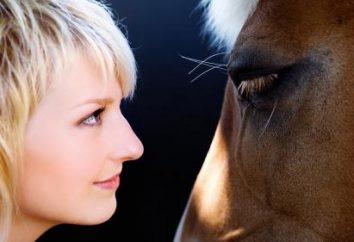 Czy wiesz, jak kończą się konie?