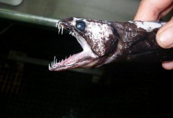Description du poisson Noir Pattenrond