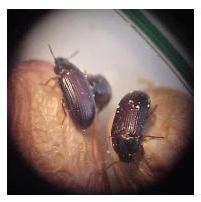 Beetle-Hexendoktor – Alternative Behandlung von schweren Krankheiten oder Trick Scharlatanen?