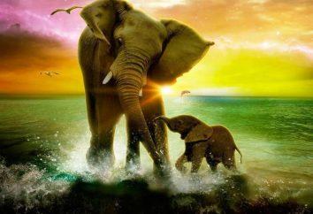 visione africana. Perché il sogno di un elefantino?