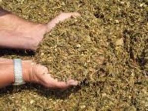 Kiszonka – puszkach masa zielony