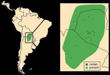 Sud America: La Plata di pianura