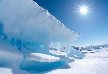 Les animaux se nourrissent de l'Arctique? Quels animaux vivent dans l'Arctique?