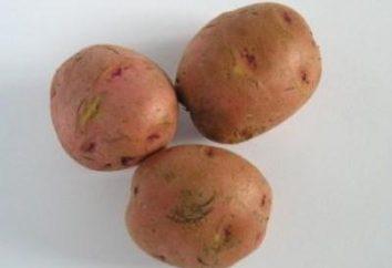 Come preparare le patate per la semina