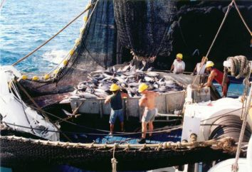 Co to jest dryfowanie, połowów dryf-netto