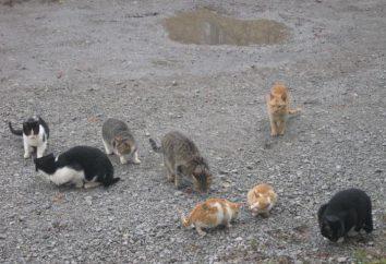 Te różne koty. Zachowanie kotów: osobowość, komunikacja z innymi zwierzętami i ludźmi