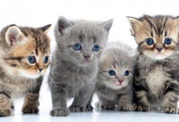 Jak koty domowe były w stanie podbić nasz świat?