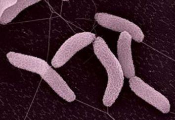 Chemosynteza – rodzaj odżywiania autotroficznej