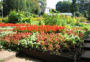 Botanischer Garten Kirov – der beste Ort für die Einsamkeit mit der Natur