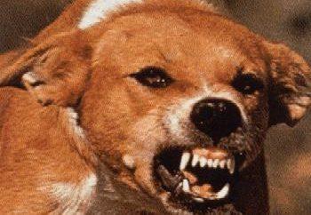 Los signos de rabia en perros: síntomas, tratamiento
