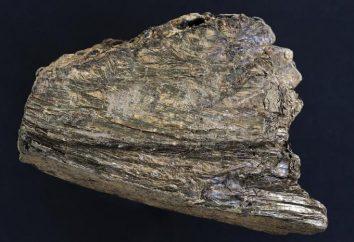 Wermikulit – co to jest? wermikulit roślin