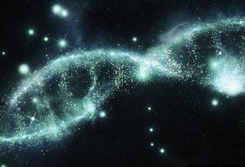 ¿Qué es un rudimento? Rudimentos y atavismo – caprichos de la naturaleza o la evidencia de la evolución?