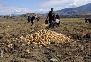 zagraniczny Rolnicza Europa. Charakterystyczny rolnictwo za granicą w Europie