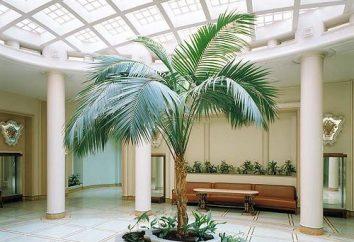 Tropikalny kwiat Hove: Opieka w domu