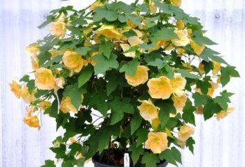 """vasos de plantas sobre a letra """"A"""": uma fotografia, uma breve descrição, uma lista de"""
