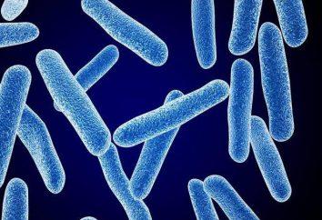 Choroby grzybicze skóry: Objawy i leczenie. Leki i środki zaradcze ludowe