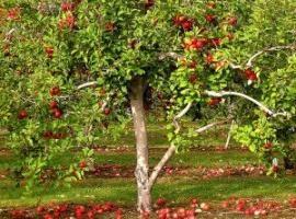 Garten Secrets: Düngen Apfelbäume im Herbst