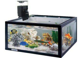 Automatyczne podajniki do akwarium: co to jest i jak wybrać