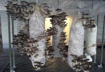 Mushroom Farm – eine Idee für Ihr eigenes Geschäft