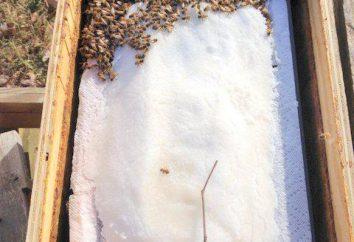 Terreautage des abeilles en Février. Comment nourrir les abeilles en hiver et au début du printemps: des conseils d'apiculteurs expérimentés