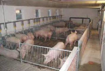 Comederos para cerdos con sus propias manos. Hopper alimentadores para cerdos