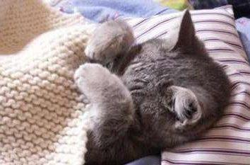 """El fármaco """"Verakol"""" a los gatos: descripción, composición, el uso de"""