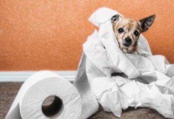 Biegunka u psów z krwi: co robić