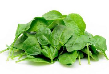 Espinaca: los beneficios y daños de producto verde