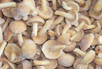 molho de cogumelos de cogumelos congelados: a receita. molho de cogumelos de cogumelos congelados com creme de leite em multivarka