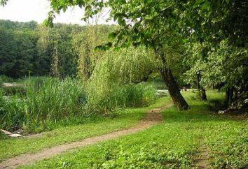 Holosiivskyi park w Kijowie: zabytki, zdjęcia
