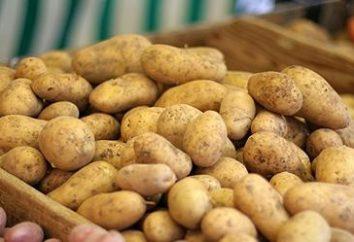 pommes de terre de qualité Rosario: Caractéristiques