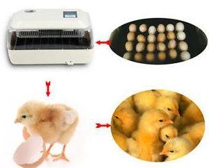 Incubateurs automatiques. Avis sur les incubateurs automatiques pour les œufs