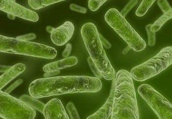 Chlamydia trachomatis – quel est ce parasite?