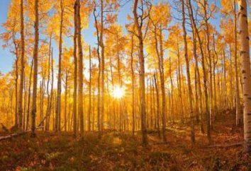 Aspen autunno – incredibile bellezza e tripudio di colori